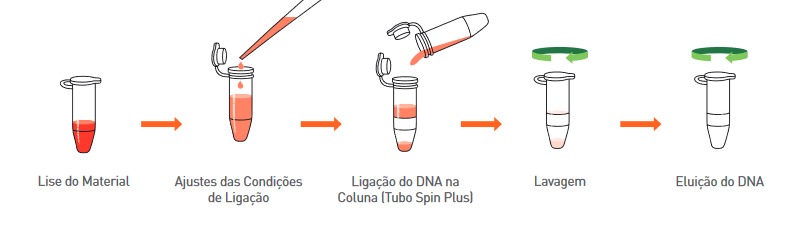 extração de DNA/RNA Manual
