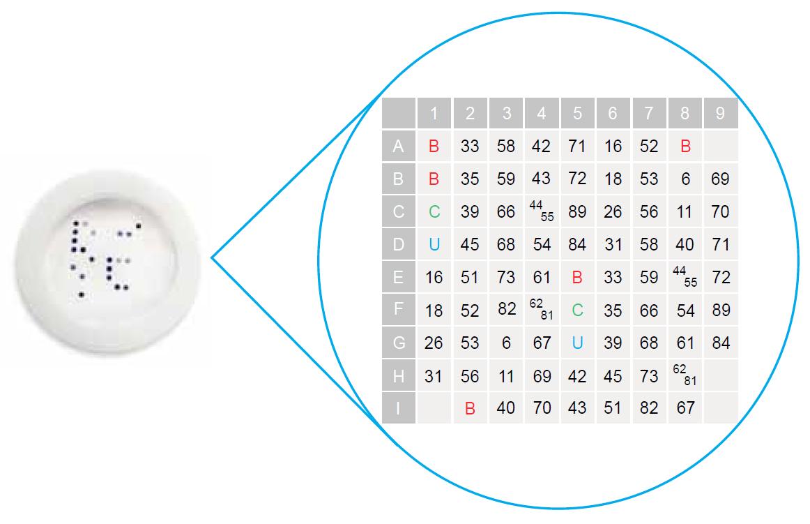 HPV - Flow Chip
