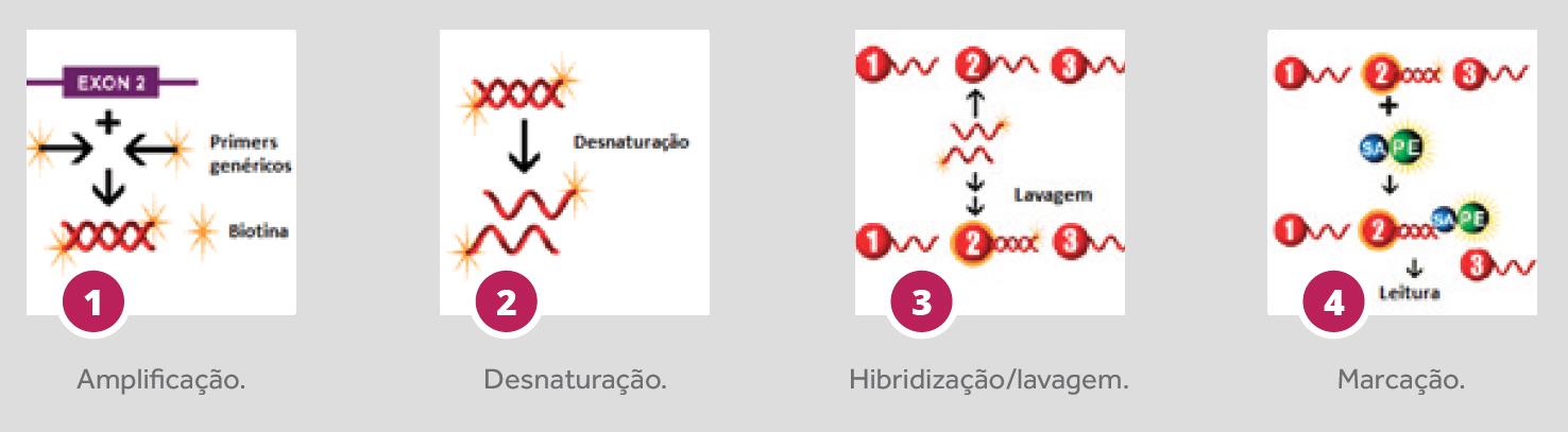 procedimento Labtype SSO